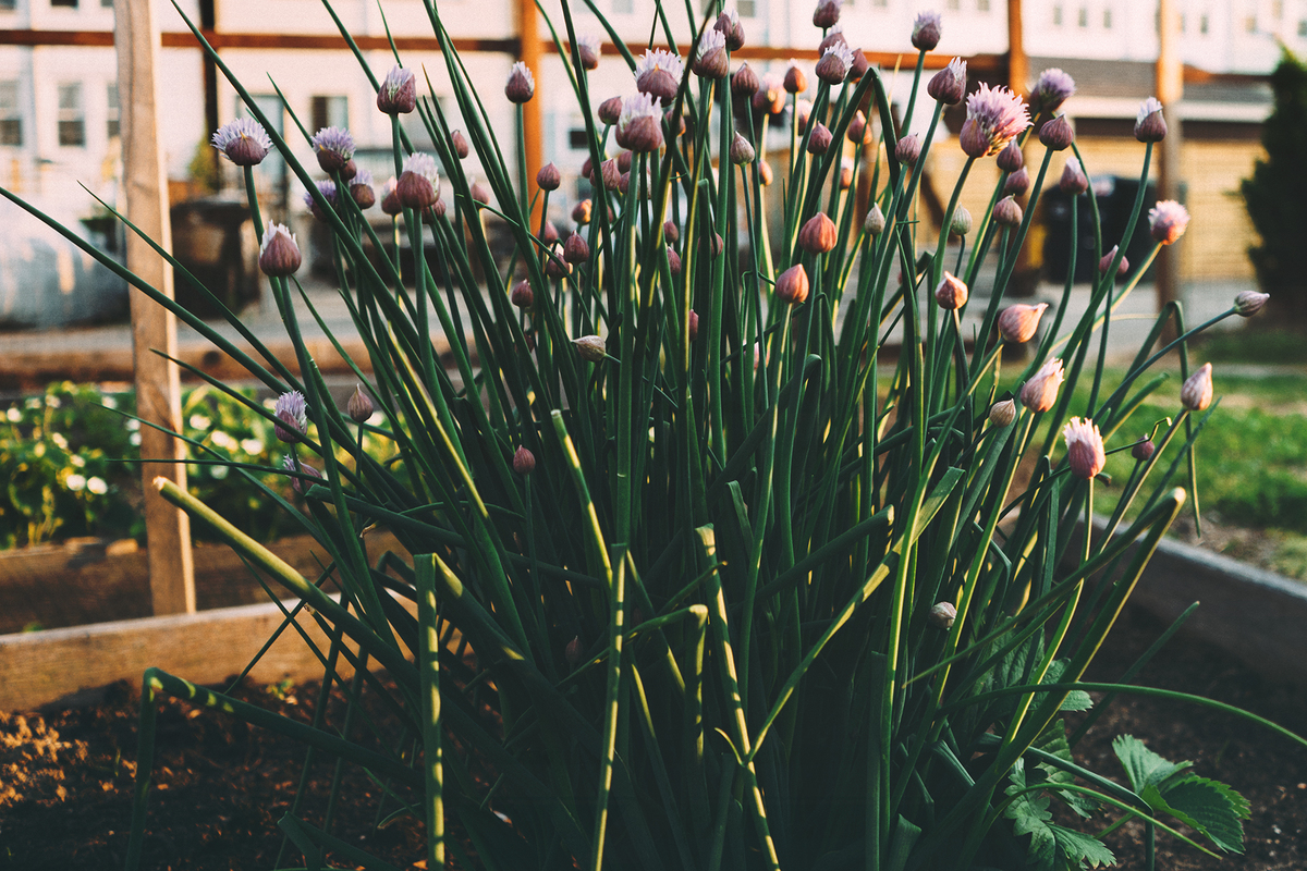 flowers-garden-herbs-flowerbed.jpg